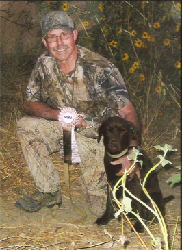 chocolate lab award willing hunting skills