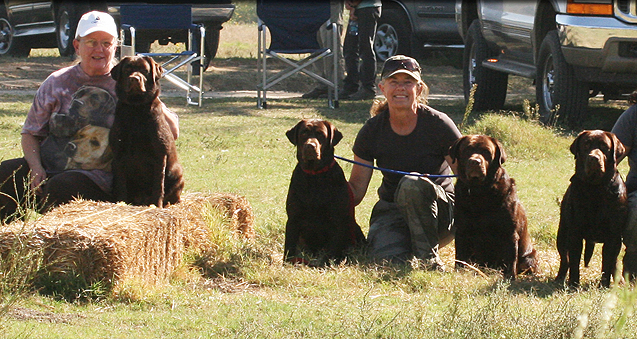 chocolate labrador retrievers WC qualifiers